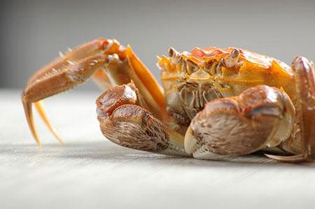 孕妇期能吃螃蟹吗