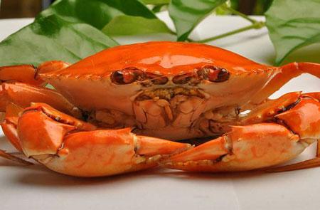 青蟹也会患病,这几种疾病最常见