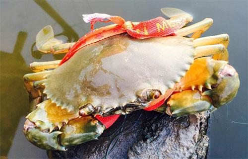 三门青蟹怎么清洗干净怎么吃好吃