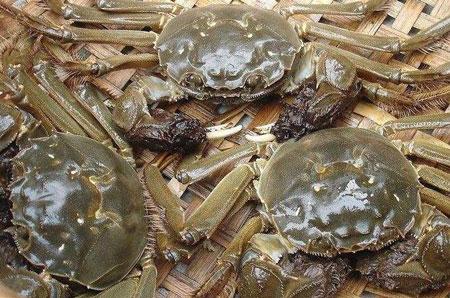 青蟹蟹苗在养殖池打洞是怎么回事?