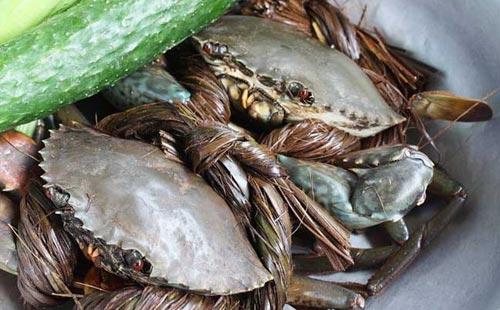 青蟹常见病害有哪些该怎样预防与治疗?