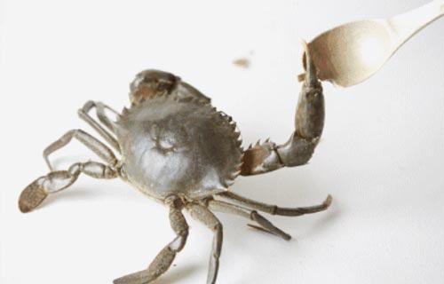 青蟹怎么做最好吃做法大全