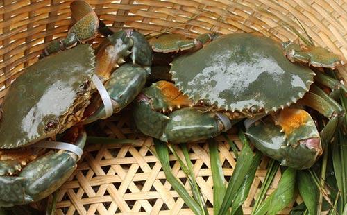 锯缘青蟹养殖技术